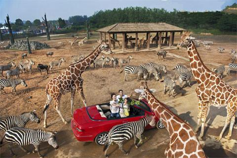 杭州野生动物世界检票采用的是浙江深大公司自主